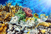 Coral in the Red Sea.Masked and diagonal butterfly.Egypt — Stock Photo