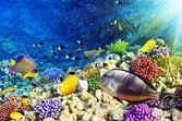 Corales y peces en el sea.egypt rojo — Foto de Stock