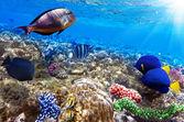 Koraal en vissen in de rode sea.egypt — Stockfoto
