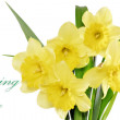 Beautiful spring flowers in vase: yellow narcissus (Daffodil) — Stock Photo #23162520