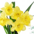 Постер, плакат: Beautiful spring flowers in vase: yellow narcissus Daffodil