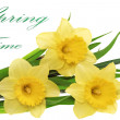 Beautiful spring three flowers : yellow narcissus (Daffodil) — Stock Photo #23229670