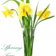 Beautiful spring flowers in vase: yellow narcissus (Daffodil) — Stock Photo