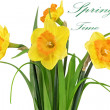 Beautiful spring flowers in vase: yellow narcissus (Daffodil) — Stock Photo #23494265