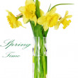Beautiful spring flowers in vase: orange narcissus (Daffodil) — Stock Photo #23494281