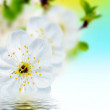 Beautiful spring flowers  background — Stock Photo