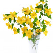 Marsh Marigold Yellow wildflowers in vase isolated on white bac — Stock Photo