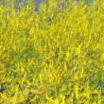 Field of wild flowers. Background — Stock Photo
