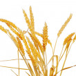 Wheat ears isolated on white background — Stock Photo #26880467