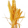 Wheat ears isolated on white background — Stock Photo