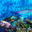 Coral and fish in the Red Sea. Egypt, Africa. — Stockfoto
