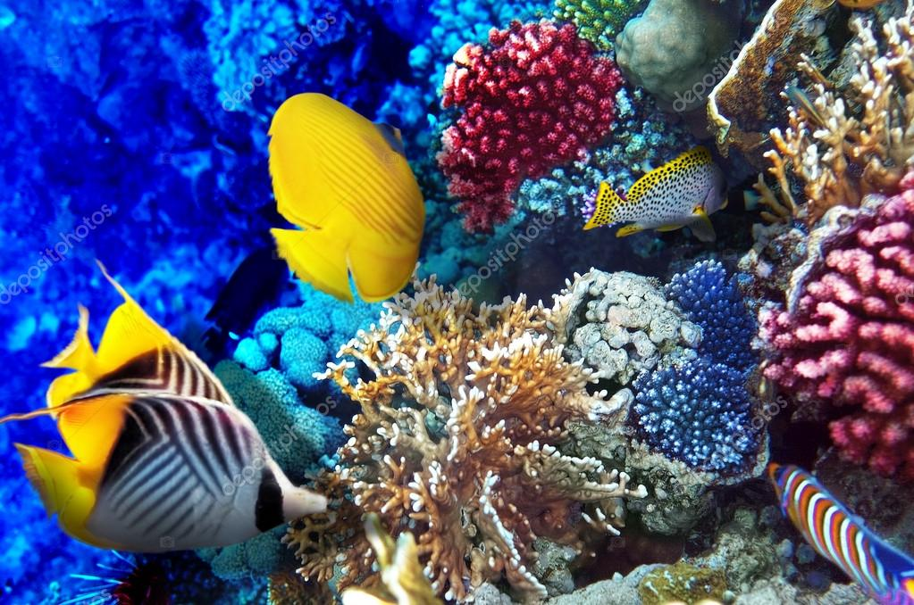 Coral and fish in the red sea egypt africa stock for Red sea fish