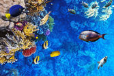 Кораллы и рыбы в Красном море. Египет, Африка. — Стоковое фото