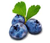 Three fresh blueberry isolated on white background — Stock Photo