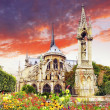 Notre Dame de Paris Cathedral, garden with flowers.Paris. France — Stock Photo