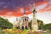 Notre dame cattedrale de paris, giardino con flowers.paris. francia — Foto Stock
