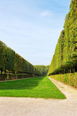 Green archway in a garden. Beautiful Versailles , France — Stock Photo