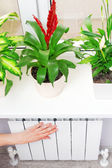 Arm put on  heating white radiator.Windowsill with flowers. — Stock Photo
