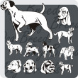 Dog Breeds - vector set — Grafika wektorowa
