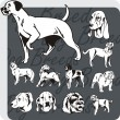 Dog Breeds - vector set — Stockvectorbeeld