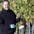 Vintner in Vineyard — Stock Photo #12069582