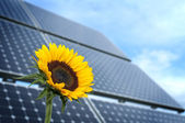 Sunflower with solar panel — Stock Photo