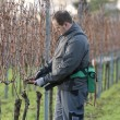 Vintner is pruning in vineyard — Stock Photo #18756465
