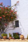 Typisches haus mit blumentöpfe in mallorca, spanien — Stockfoto