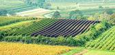 Beautiful Vineyard Landscape — Стоковое фото