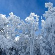 Snowy Trees in Winter — Stock Photo