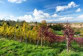 Sonbahar bağ — Stok fotoğraf