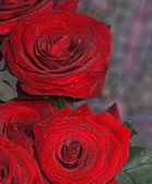 Rer roses — Stock Photo
