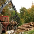 Unloading firewood.  Autumn works. — Stock Photo