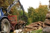 Déchargement de bois. travaux automne. — Photo