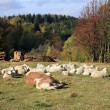 Farmer animals sunbathing in the autumn sun - Stock Photo