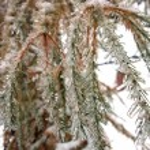 Winter tree — Stock Photo #14142963