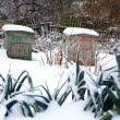 Winter garden — Stock Photo