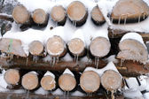 Firewood covered in snow and icicles — Stock Photo