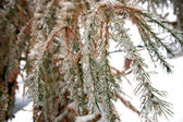 árvore de inverno — Foto Stock