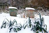 Winter garden — Stock Photo