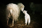 Maternal instinct — Stock Photo