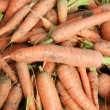 Stock Photo: Bio carrots on patch in vegetable garden.