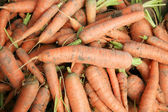 Bio carrots on the patch in the vegetable garden. — Stock Photo