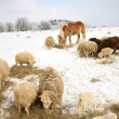 Winter on the farm. — 图库照片