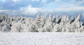 Spruce covered with snow. Winter landscape. — Stock Photo