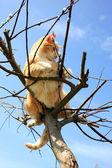 在柳树上的猫 — 图库照片