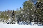 Winter in spring. — Stock Photo