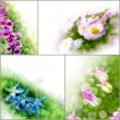 Collage flowers floral tulip daisy background spring bell - Stock Photo