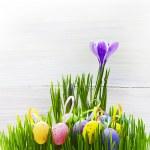 Easter Egg background wooden card spring flower grass — Stock Photo #21564103