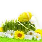 Easter Egg background wooden card spring flower grass — Stock Photo #21564357